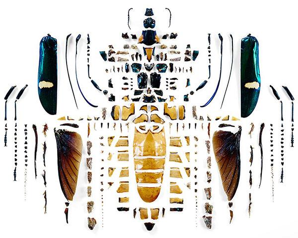insecte-chirurgien-japon