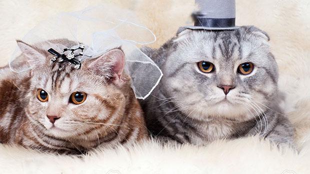 mariage-bague-chats-japon