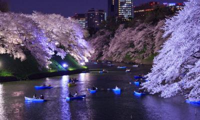 tourisme-japon-tokyo-avril-japon