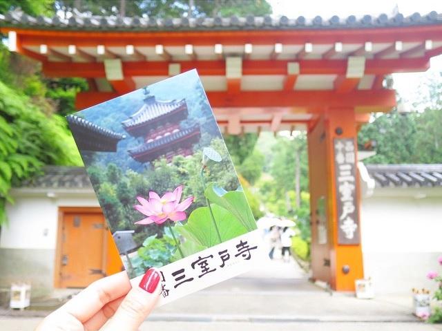 fleurs-hortensia-coeur-japon-temple-japonais-kyoto (1)