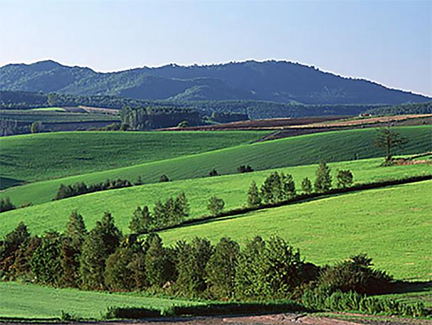 Les collines vertes et l'air pur de Furano sont un environnement idéal pour la croissance de certains des meilleurs produits du pays.
