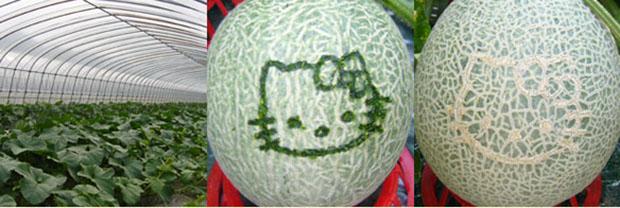 melon-hellokitty