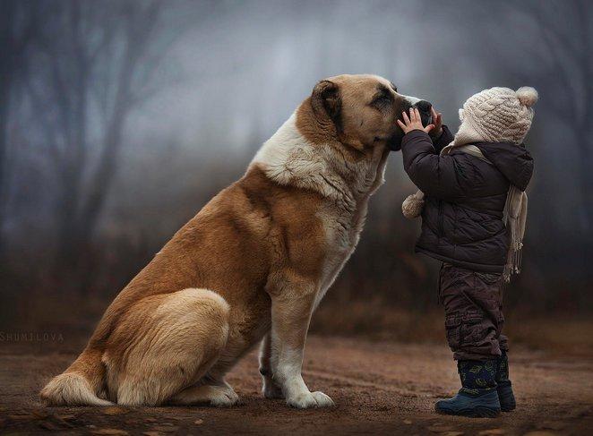 assurance-animaux-conges-deces