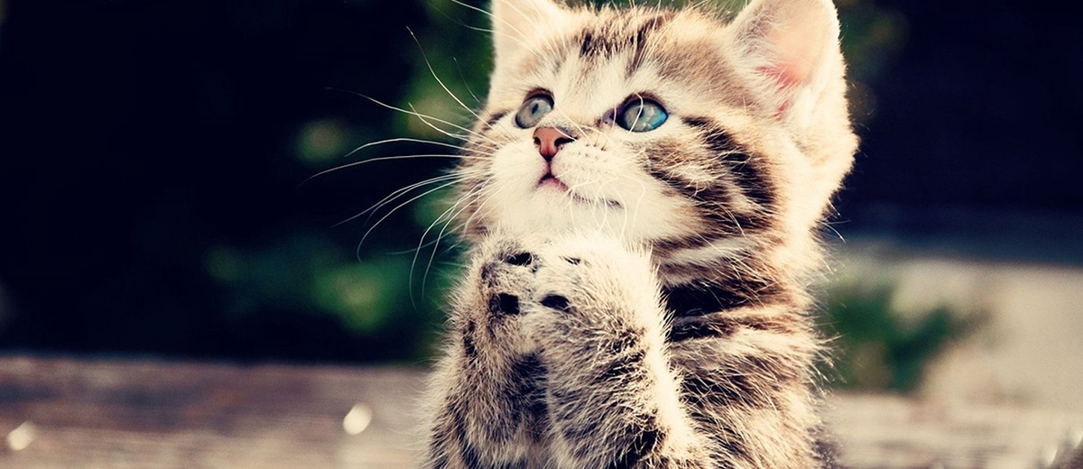 Son Amour Pour Les Chats Lui A Sauvé La Vie